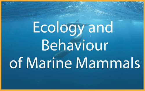 Ecology and Behaviour of Marine Mammals